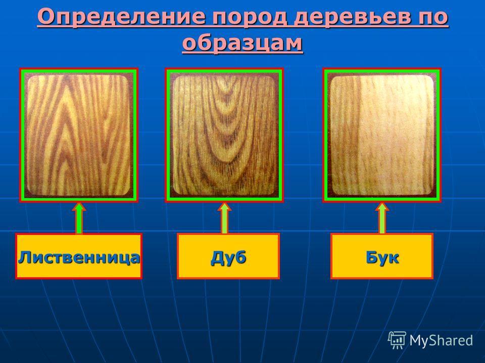 Определение пород деревьев по образцам БукДубЛиственница