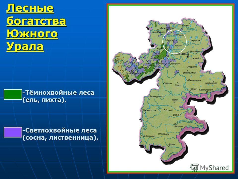 Лесные богатства Южного Урала -Тёмнохвойные леса (ель, пихта). -Светлохвойные леса (сосна, лиственница).