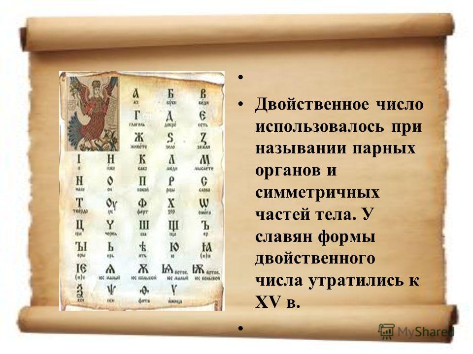 Двойственное число использовалось при назывании парных органов и симметричных частей тела. У славян формы двойственного числа утратились к XV в.