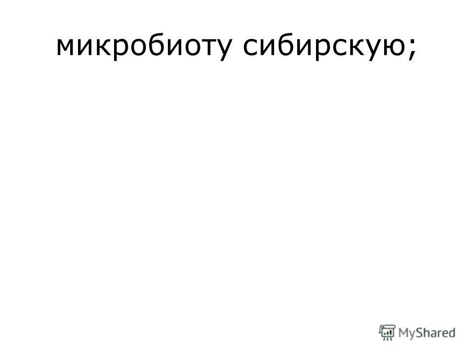 микробиоту сибирскую;