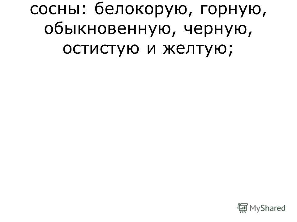 сосны: белокорую, горную, обыкновенную, черную, остистую и желтую;