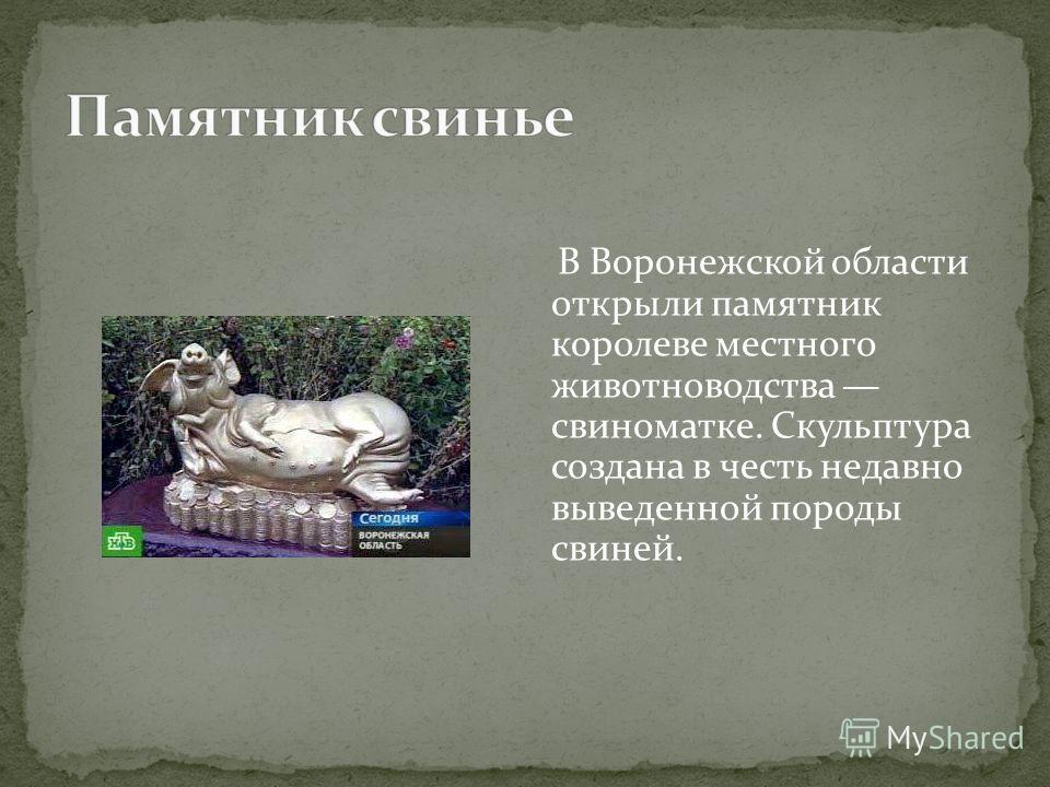 В Воронежской области открыли памятник королеве местного животноводства свиноматке. Скульптура создана в честь недавно выведенной породы свиней.