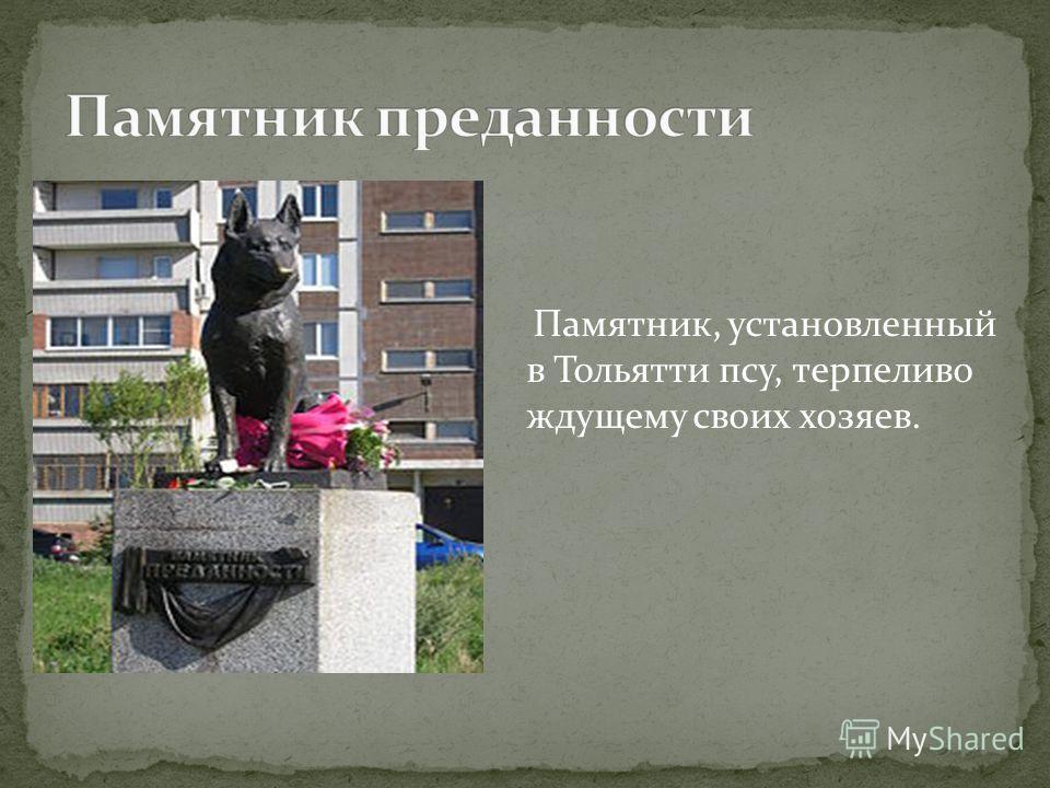 Памятник, установленный в Тольятти псу, терпеливо ждущему своих хозяев.