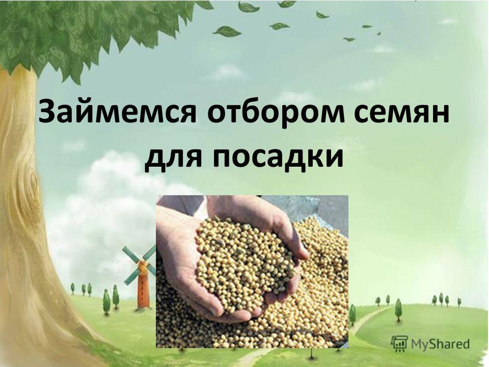 Займемся отбором семян для посадки