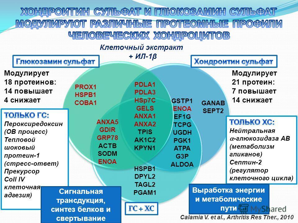 Клеточный экстракт + ИЛ-1β GANAB SEPT2 GSTP1 ENOA EF1G TCPG UGDH PGK1 ATPA G3P ALDOA PROX1 HSPB1 COBA1 HSPB1 DPYL2 TAGL2 PGAM1 PDLA1 PDLA3 HSp7C GELS ANXA1 ANXA2 TPIS AK1C2 KPYN1 ANXA5 GDIR GRP78 ACTB SODM ENOA Модулирует 21 протеин: 7 повышает 14 сн