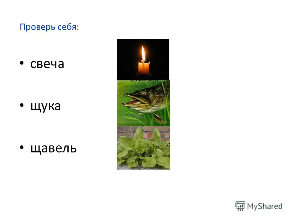 Света – та + ча = щу + рука – ру = роща – ро + вель =