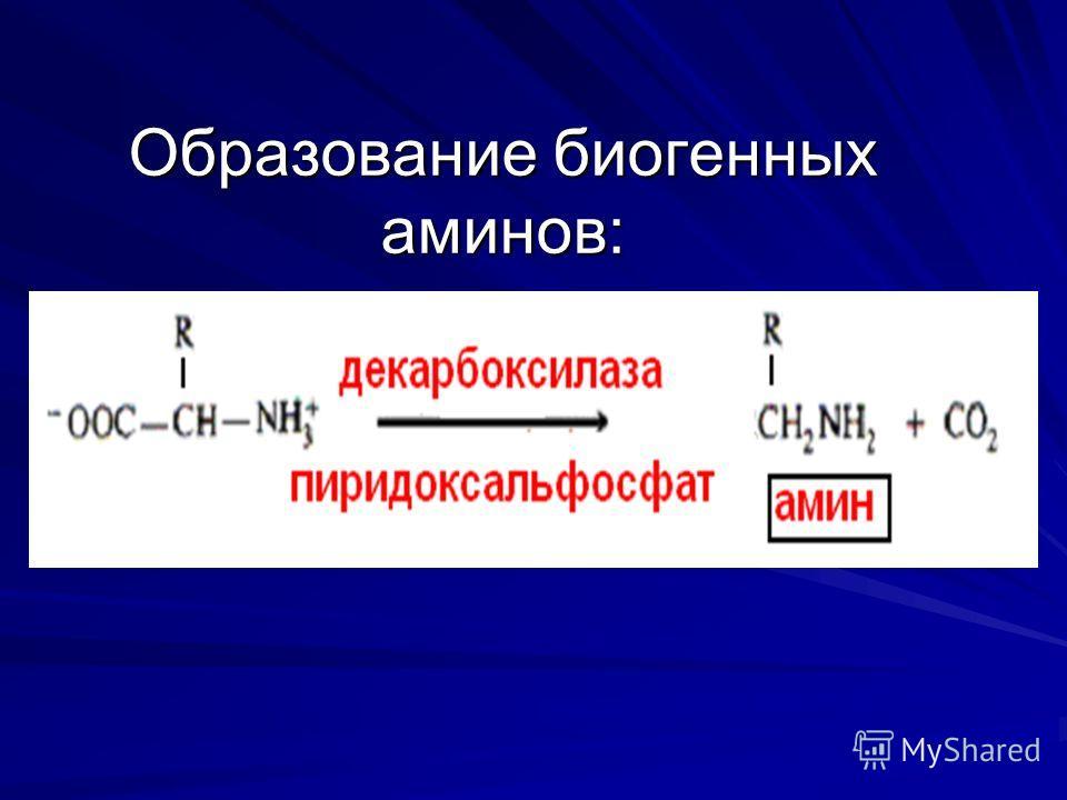 Образование биогенных аминов: