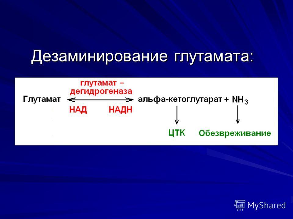 Дезаминирование глутамата:
