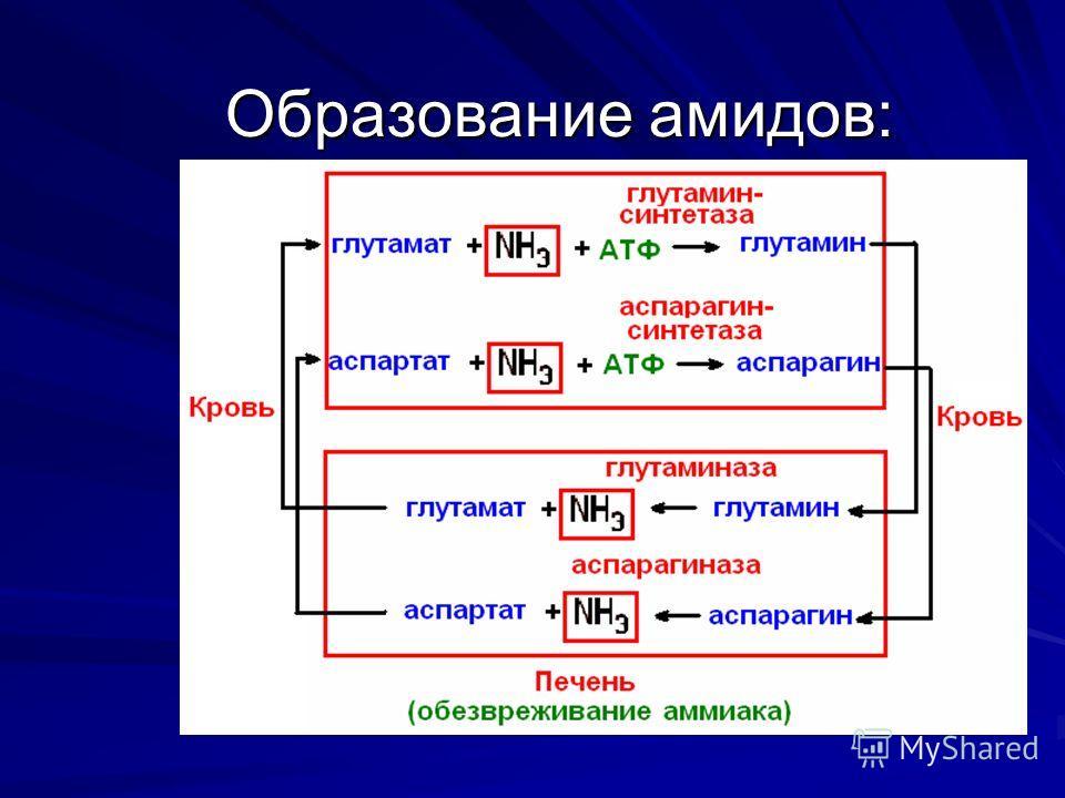 Образование амидов: