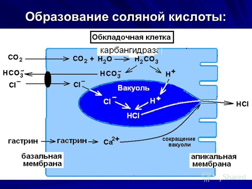 Образование соляной кислоты: