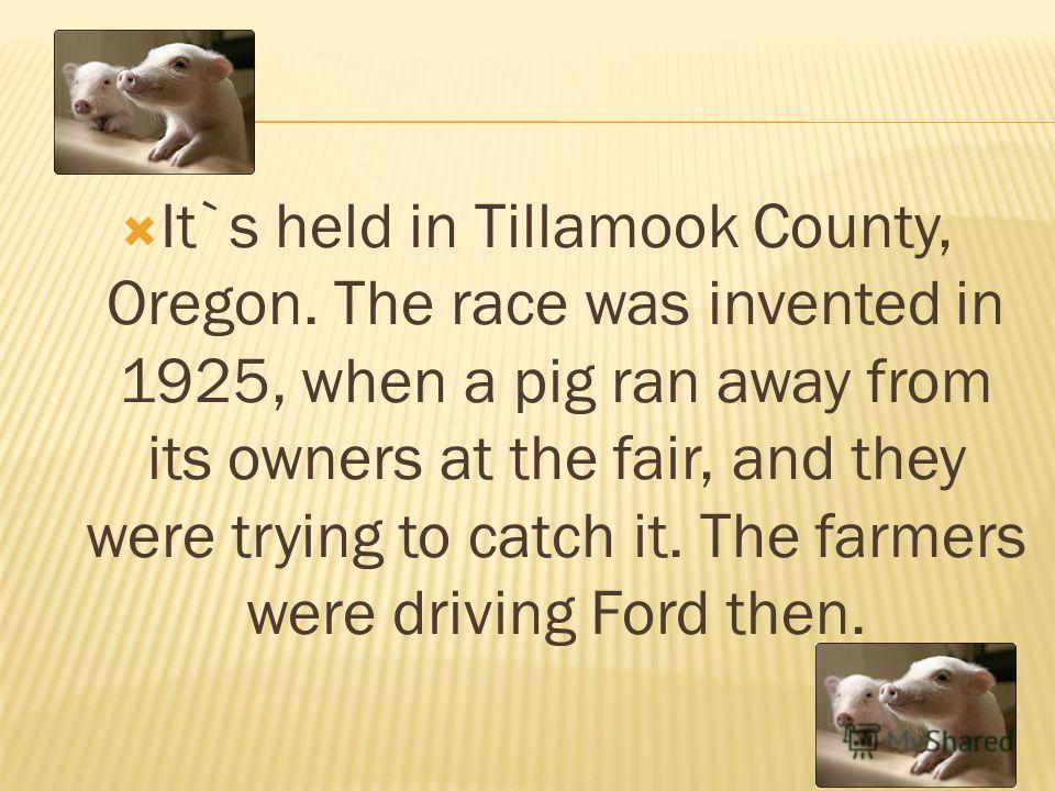 It`s held in Tillamook County, Oregon. The race was invented in 1925, when a pig ran away from its owners at the fair, and they were trying to catch it. The farmers were driving Ford then.