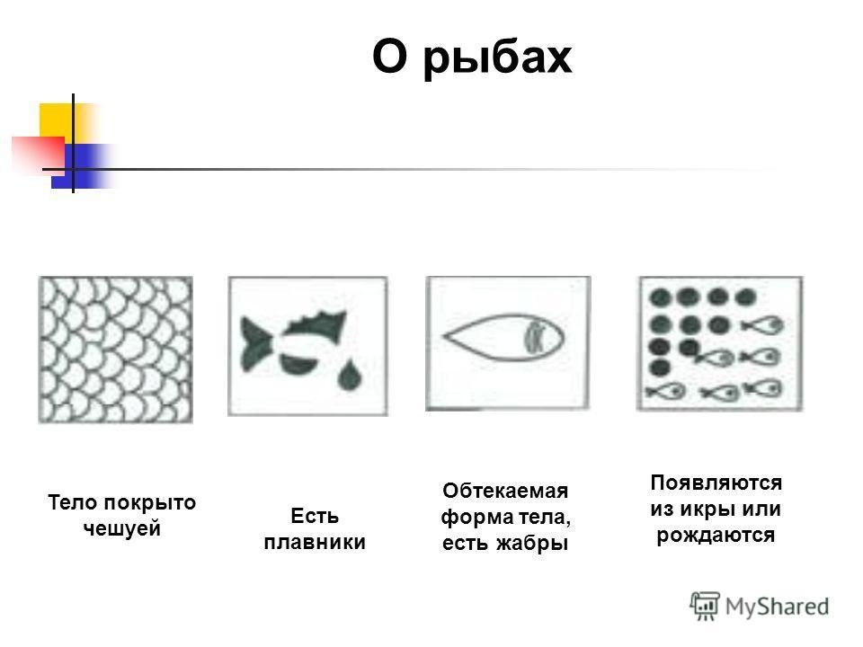 О рыбах Тело покрыто чешуей Есть плавники Обтекаемая форма тела, есть жабры Появляются из икры или рождаются