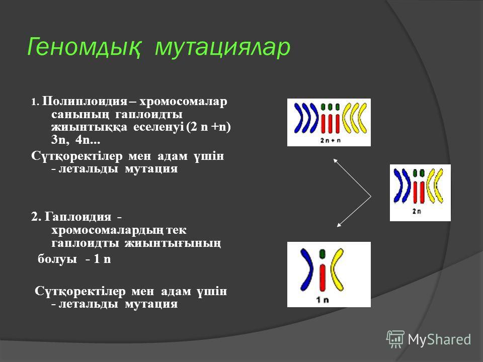 Геномды қ мутациялар 1. Полиплоидия – хромосомалар санының гаплоидты жиынтыққа еселенуі (2 n +n) 3n, 4n... Сүтқоректілер мен адам үшін - летальды мутация 2. Гаплоидия - хромосомалардың тек гаплоидты жиынтығының болуы - 1 n Сүтқоректілер мен адам үшін