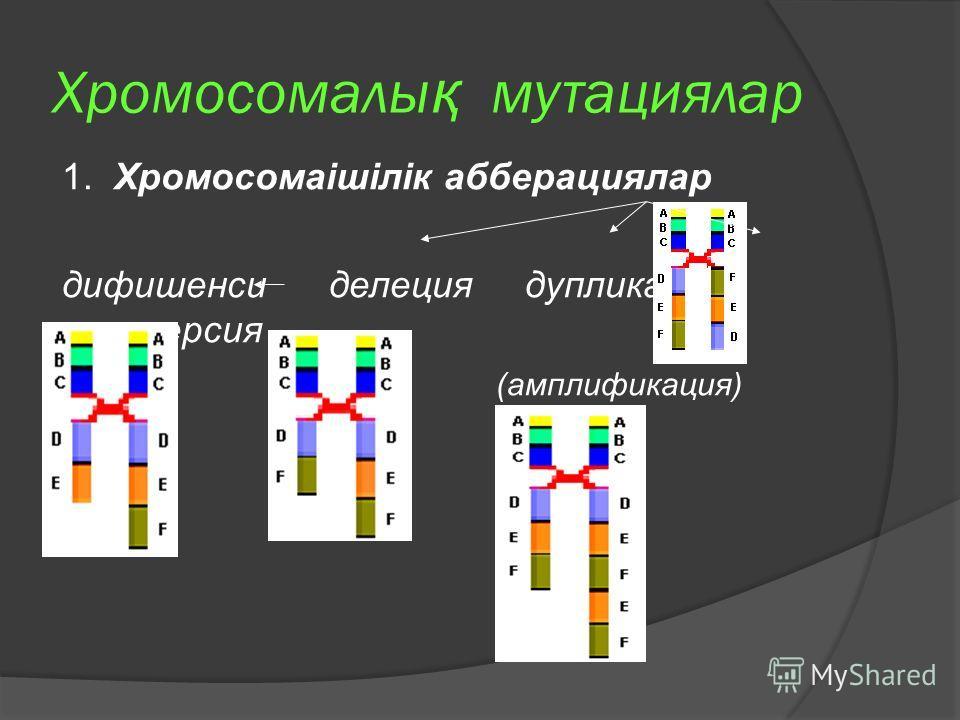 Хромосомалы қ мутациялар 1. Хромосомаішілік абберациялар дифишенси делеция дупликация инверсия (амплификация)