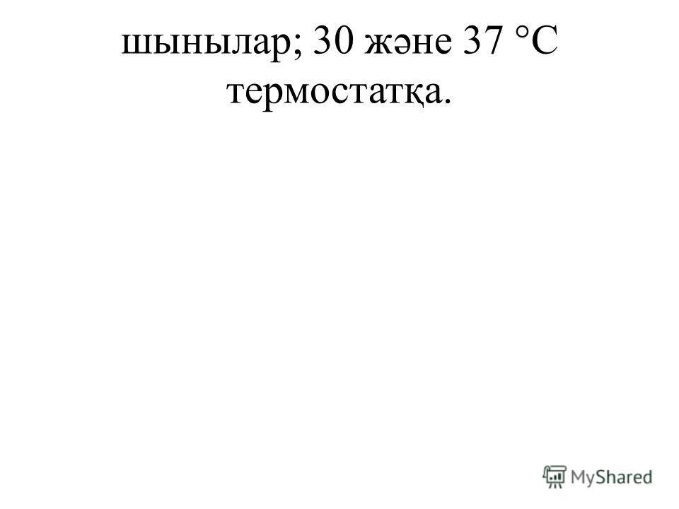 шынылар; 30 жəне 37 °С термостатқа.