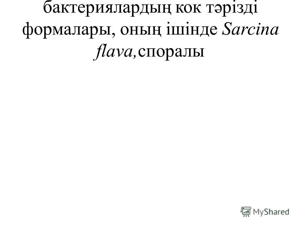 бактериялардың кок тəрізді формалары, оның ішінде Sarcina flava,споралы