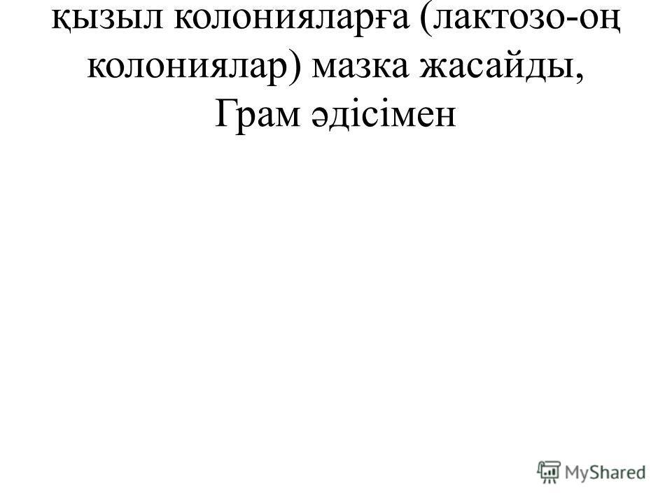 қызыл колонияларға (лактозо-оң колониялар) мазка жасайды, Грам əдісімен