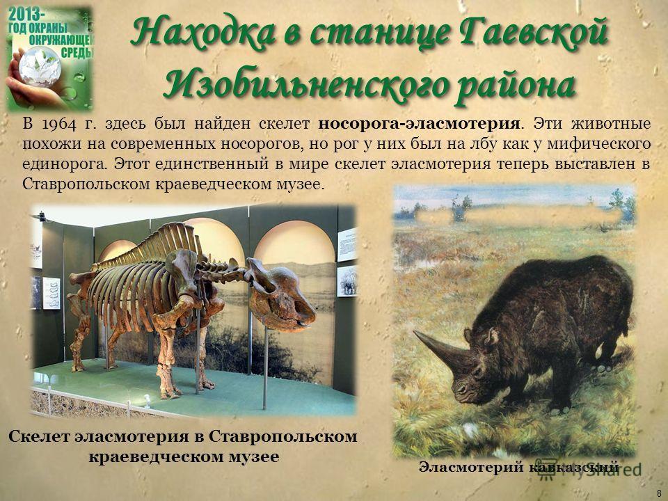 Находка в станице Гаевской Изобильненского района 8 В 1964 г. здесь был найден скелет носорога-эласмотерия. Эти животные похожи на современных носорогов, но рог у них был на лбу как у мифического единорога. Этот единственный в мире скелет эласмотерия