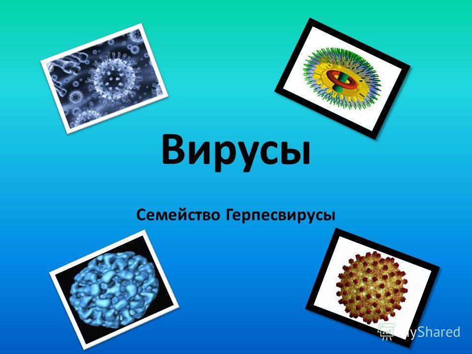 Вирусы Семейство Герпесвирусы