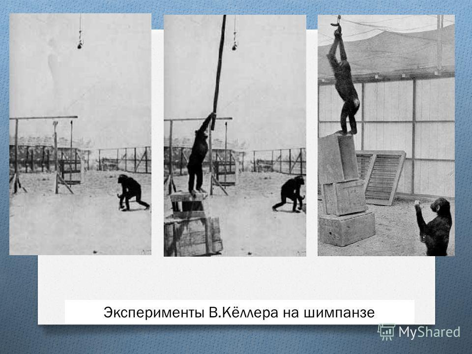 Эксперименты В.Кёллера на шимпанзе