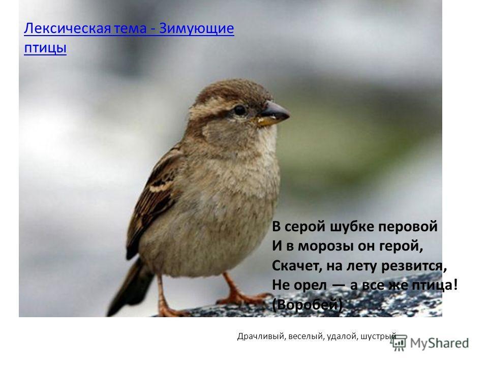 Драчливый, веселый, удалой, шустрый Лексическая тема - Зимующие птицы В серой шубке перовой И в морозы он герой, Скачет, на лету резвится, Не орел а все же птица! (Воробей)
