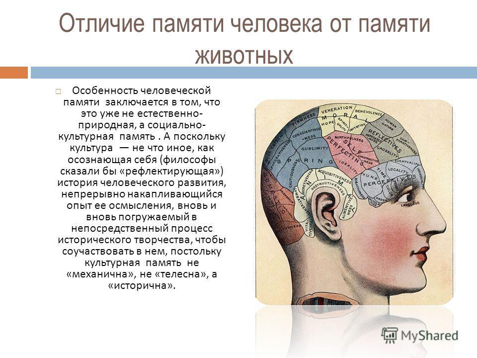 Отличие памяти человека от памяти животных Особенность человеческой памяти заключается в том, что это уже не естественно - природная, а социально - культурная память. А поскольку культура не что иное, как осознающая себя ( философы сказали бы « рефле