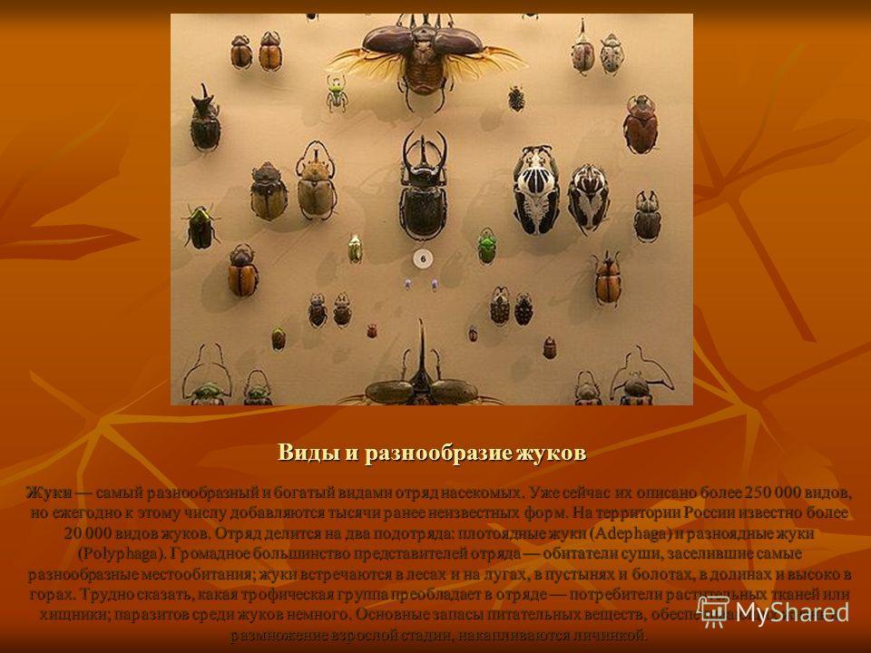 Виды и разнообразие жуков Жуки самый разнообразный и богатый видами отряд насекомых. Уже сейчас их описано более 250 000 видов, но ежегодно к этому числу добавляются тысячи ранее неизвестных форм. На территории России известно более 20 000 видов жуко