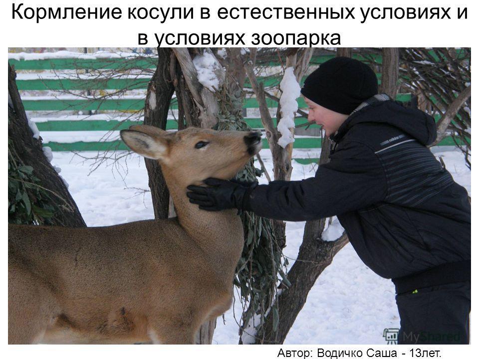 Кормление косули в естественных условиях и в условиях зоопарка Автор: Водичко Саша - 13лет.