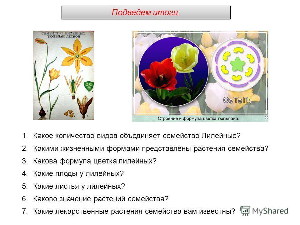 1.Какое количество видов объединяет семейство Лилейные? 2.Какими жизненными формами представлены растения семейства? 3.Какова формула цветка лилейных? 4.Какие плоды у лилейных? 5.Какие листья у лилейных? 6.Каково значение растений семейства? 7.Какие