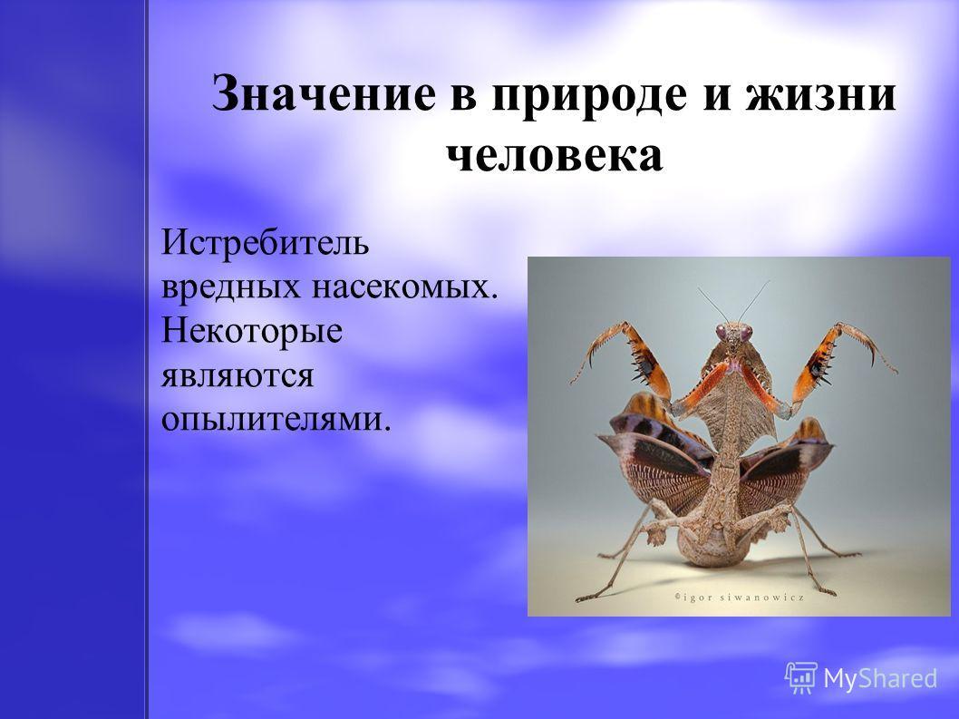 Значение в природе и жизни человека Истребитель вредных насекомых. Некоторые являются опылителями.