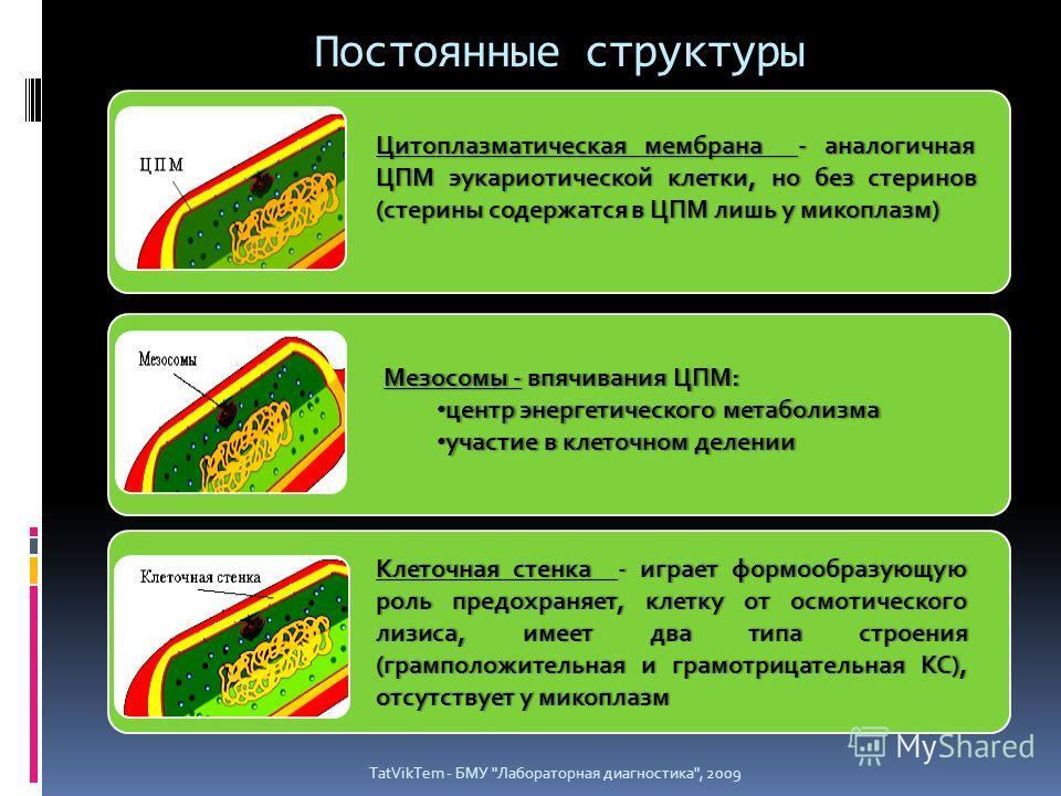 Постоянные структуры TatVikTem - БМУ