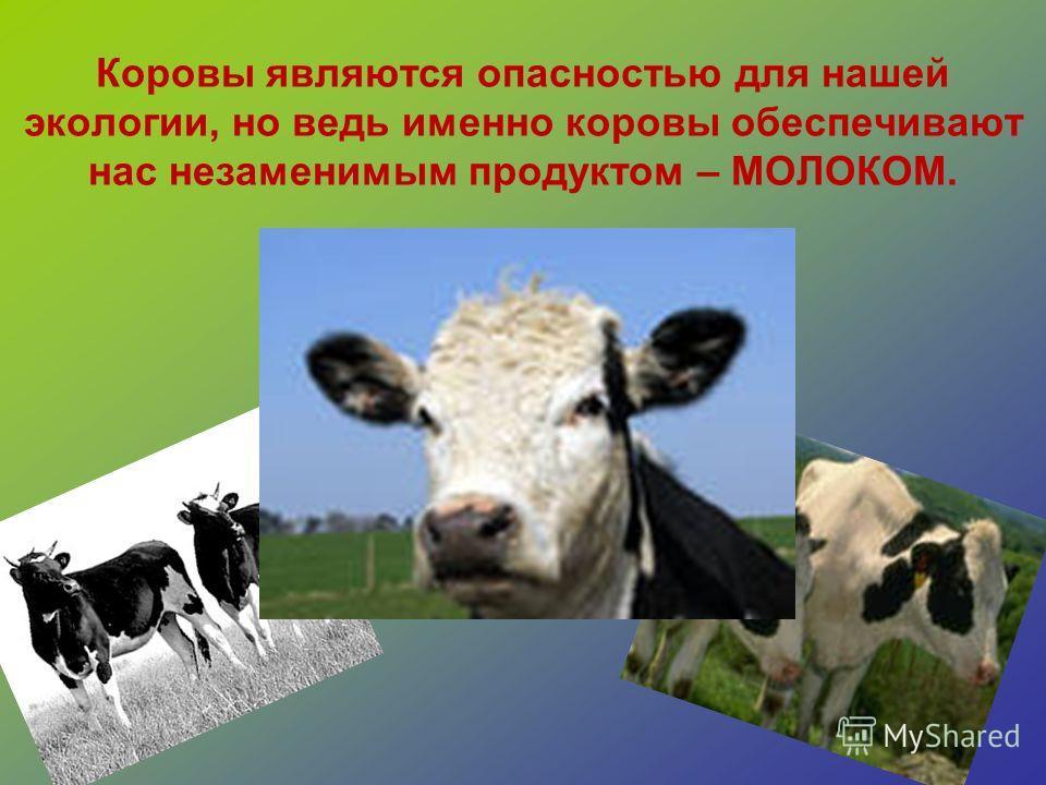 Коровы являются опасностью для нашей экологии, но ведь именно коровы обеспечивают нас незаменимым продуктом – МОЛОКОМ.