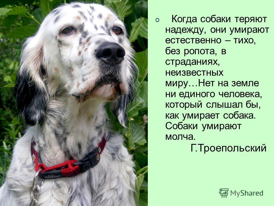 Когда собаки теряют надежду, они умирают естественно – тихо, без ропота, в страданиях, неизвестных миру…Нет на земле ни единого человека, который слышал бы, как умирает собака. Собаки умирают молча. Г.Троепольский