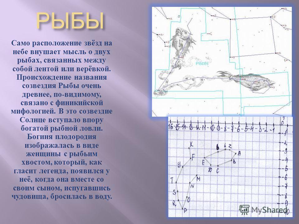 РЫБЫ Само расположение звёзд на небе внушает мысль о двух рыбах, связанных между собой лентой или верёвкой. Происхождение названия созвездия Рыбы очень древнее, по - видимому, связано с финикийской мифологией. В это созвездие Солнце вступало впору бо