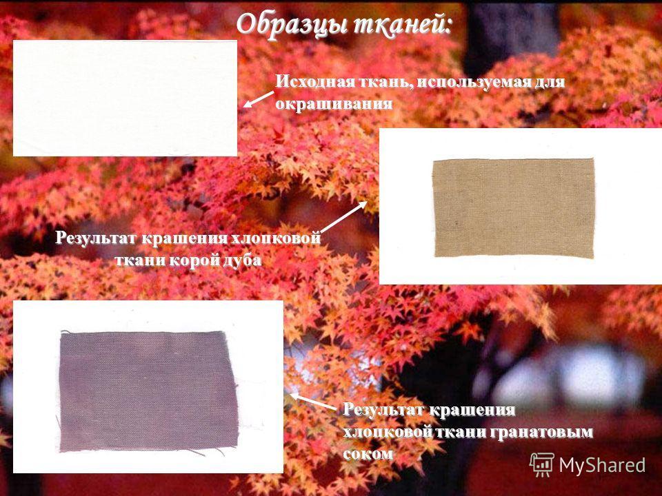 Образцы тканей: Исходная ткань, используемая для окрашивания Результат крашения хлопковой ткани корой дуба Результат крашения хлопковой ткани гранатовым соком