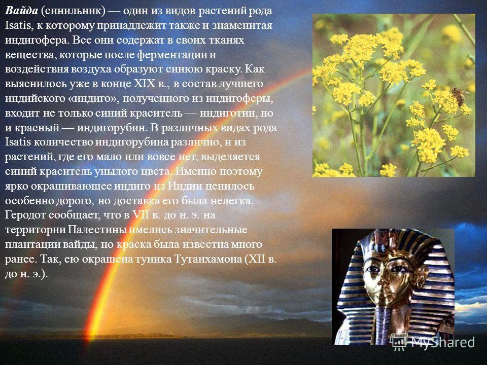 Вайда (синильник) один из видов растений рода Isatis, к которому принадлежит также и знаменитая индигофера. Все они содержат в своих тканях вещества, которые после ферментации и воздействия воздуха образуют синюю краску. Как выяснилось уже в конце XI