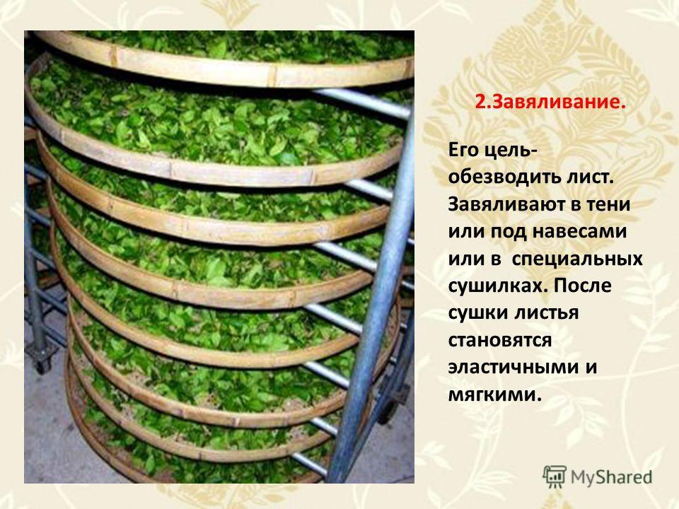 2.Завяливание. Его цель- обезводить лист. Завяливают в тени или под навесами или в специальных сушилках. После сушки листья становятся эластичными и мягкими.