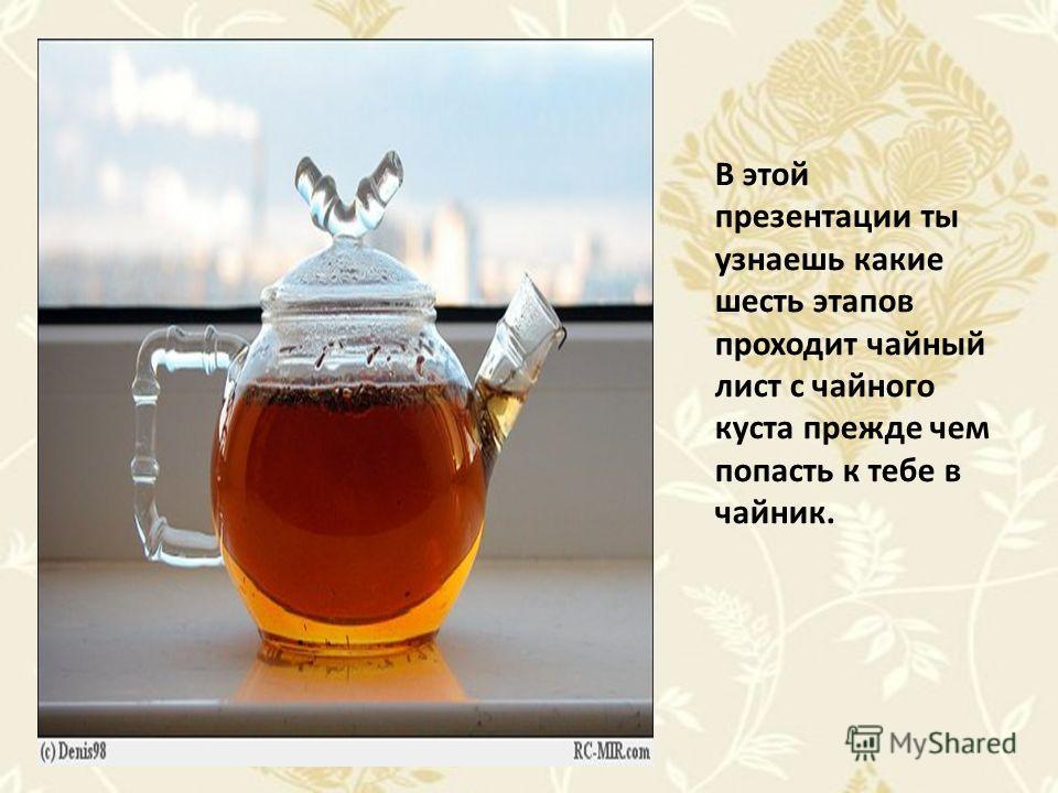 В этой презентации ты узнаешь какие шесть этапов проходит чайный лист с чайного куста прежде чем попасть к тебе в чайник.