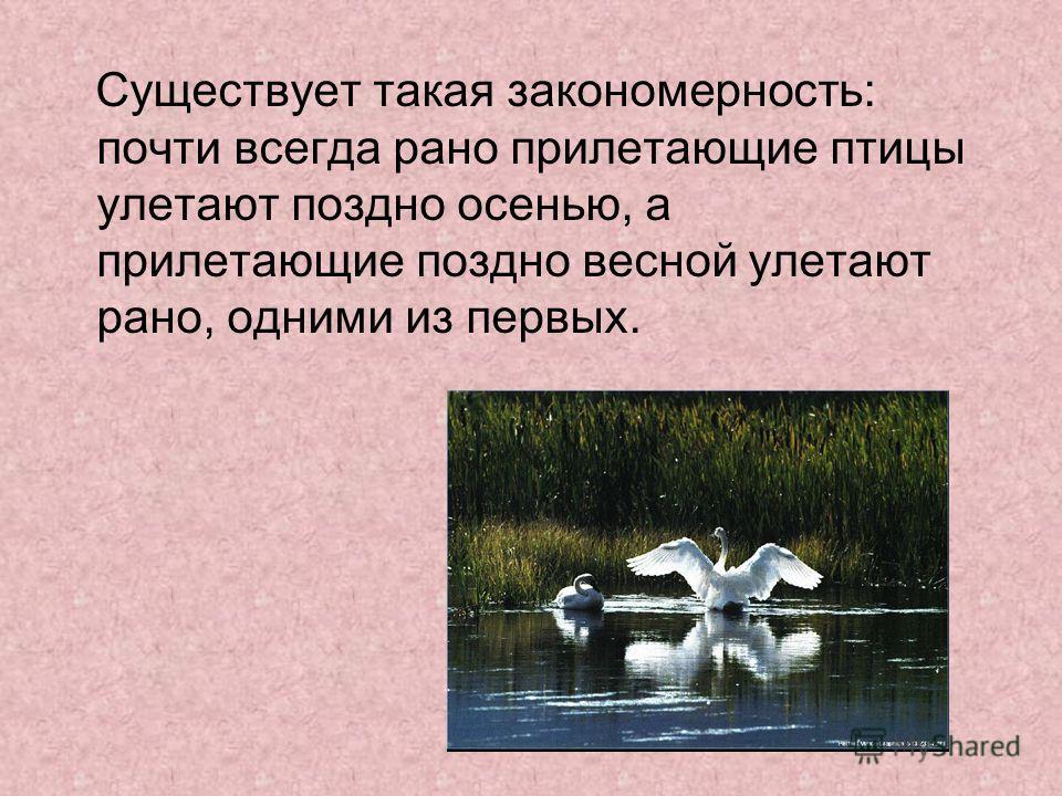 Существует такая закономерность: почти всегда рано прилетающие птицы улетают поздно осенью, а прилетающие поздно весной улетают рано, одними из первых.