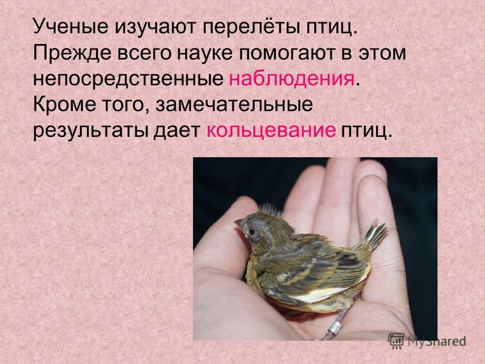 Ученые изучают перелёты птиц. Прежде всего науке помогают в этом непосредственные наблюдения. Кроме того, замечательные результаты дает кольцевание птиц.