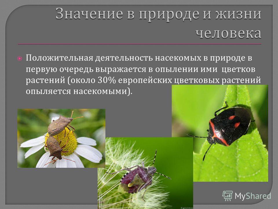 Положительная деятельность насекомых в природе в первую очередь выражается в опылении ими цветков растений ( около 30% европейских цветковых растений опыляется насекомыми ).