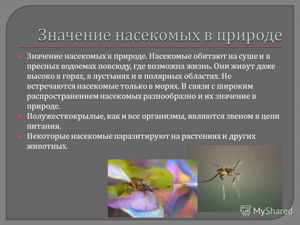 Значение насекомых в природе. Насекомые обитают на суше и в пресных водоемах повсюду, где возможна жизнь. Они живут даже высоко в горах, в пустынях и в полярных областях. Не встречаются насекомые только в морях. В связи с широким распространением нас