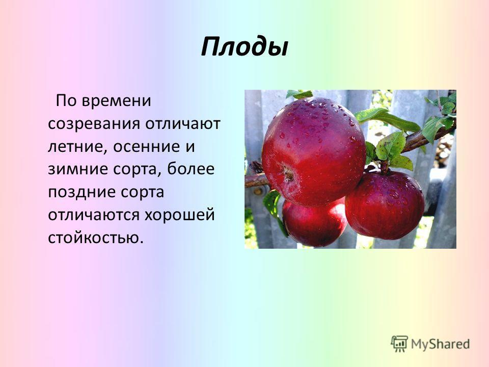 Плоды По времени созревания отличают летние, осенние и зимние сорта, более поздние сорта отличаются хорошей стойкостью.