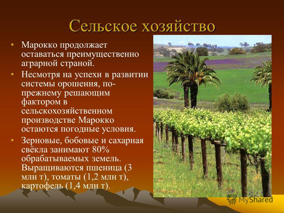 Сельское хозяйство Марокко продолжает оставаться преимущественно аграрной страной. Несмотря на успехи в развитии системы орошения, по- прежнему решающим фактором в сельскохозяйственном производстве Марокко остаются погодные условия. Зерновые, бобовые