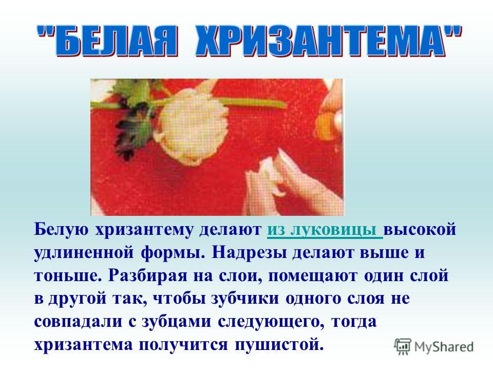 Белую хризантему делают из луковицы высокой удлиненной формы. Надрезы делают выше и тоньше. Разбирая на слои, помещают один слой в другой так, чтобы зубчики одного слоя не совпадали с зубцами следующего, тогда хризантема получится пушистой.из луковиц
