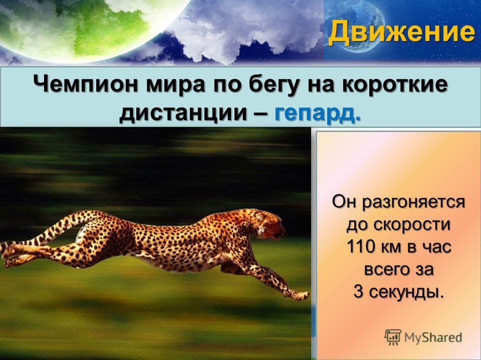 Движение Чемпион мира по бегу на короткие дистанции – гепард. Он разгоняется до скорости 110 км в час всего за 3 секунды.