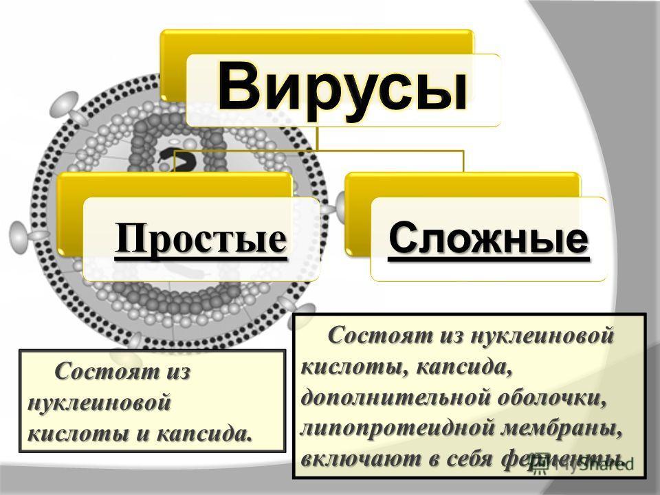ПростыеСложные Состоят из нуклеиновой кислоты и капсида. Состоят из нуклеиновой кислоты, капсида, дополнительной оболочки, липопротеидной мембраны, включают в себя ферменты.