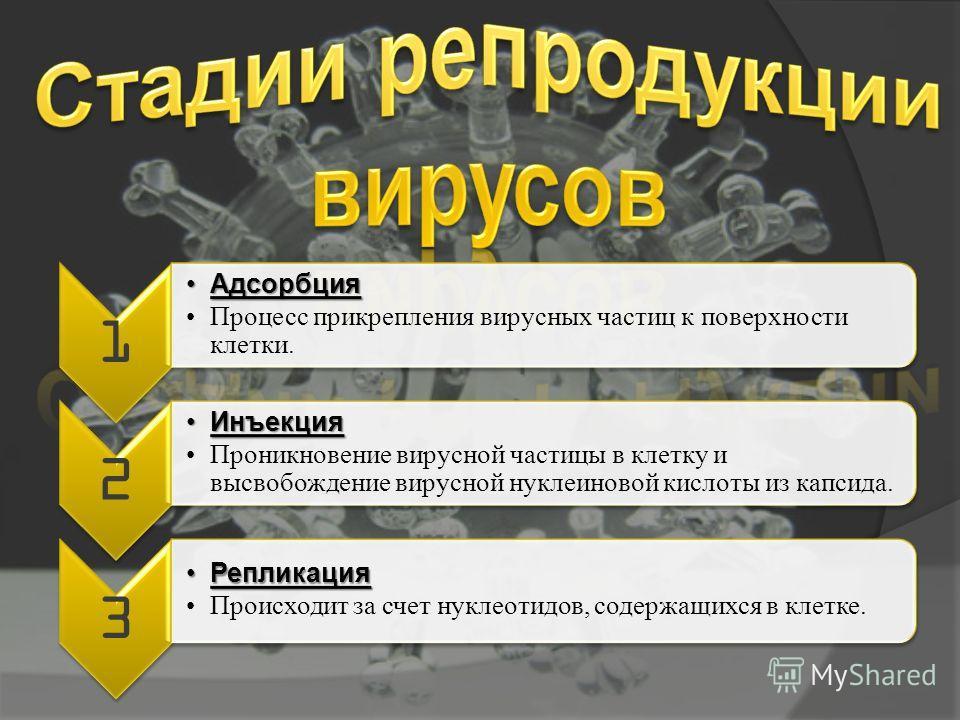 1 АдсорбцияАдсорбция Процесс прикрепления вирусных частиц к поверхности клетки. 2 ИнъекцияИнъекция Проникновение вирусной частицы в клетку и высвобождение вирусной нуклеиновой кислоты из капсида. 3 РепликацияРепликация Происходит за счет нуклеотидов,