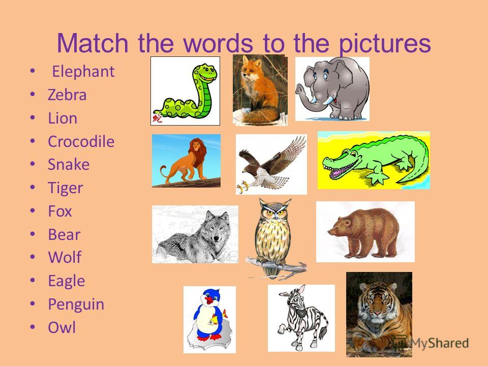 Match the words to the pictures Elephant Zebra Lion Crocodile Snake Tiger Fox Bear Wolf Eagle Penguin Owl