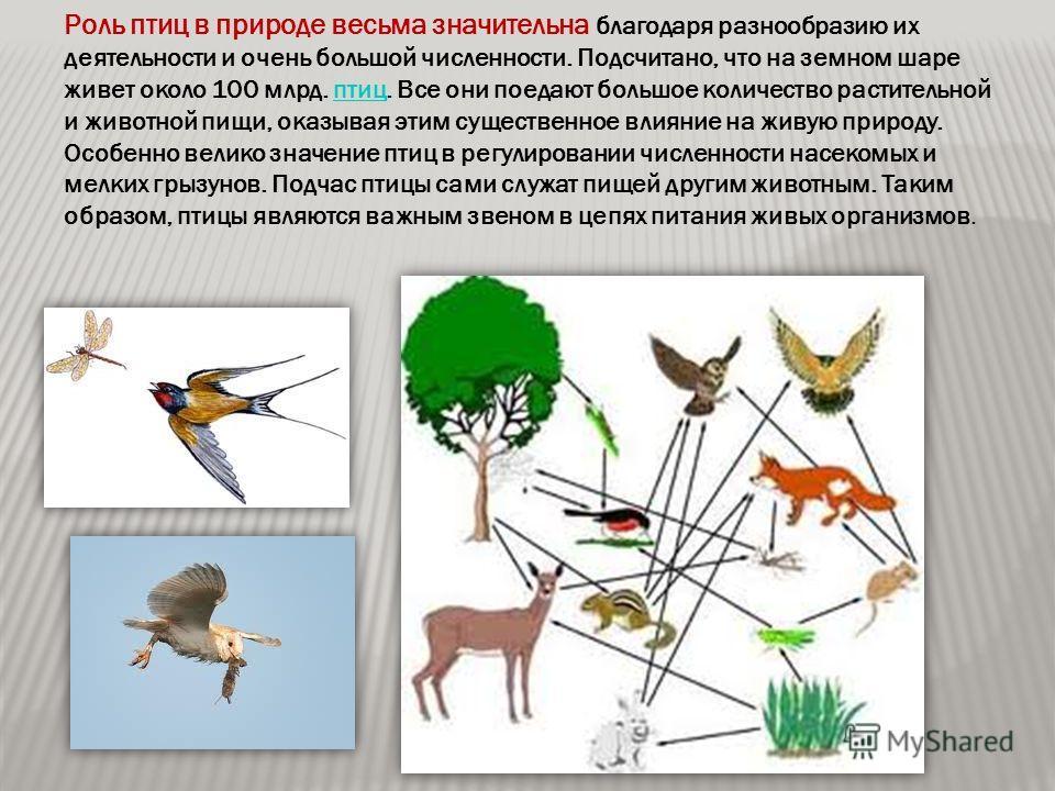 Роль птиц в природе весьма значительна благодаря разнообразию их деятельности и очень большой численности. Подсчитано, что на земном шаре живет около 100 млрд. птиц. Все они поедают большое количество растительной и животной пищи, оказывая этим сущес